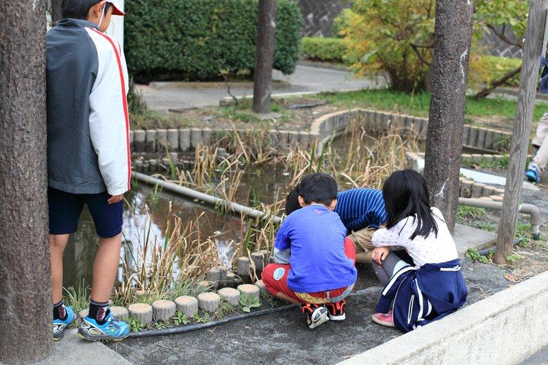 さかな池で遊ぶ子どもたち