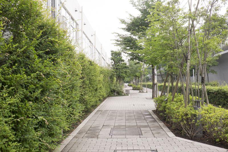 「杉並区立井草中学校」横の植栽