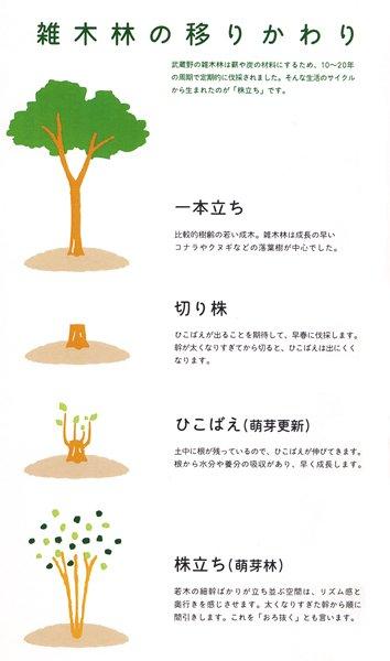 雑木林の移りかわり
