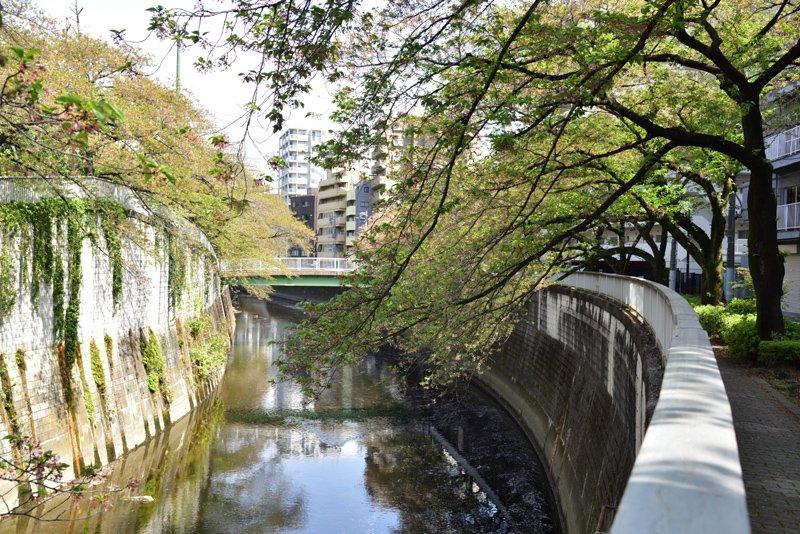 神田川沿いの遊歩道
