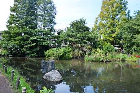 東綾瀬公園 観察の池