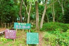 子どもたちの「やってみたい」という気持ちを 重視した、自然いっぱいの遊び場づくり/芹ヶ谷公園・冒険遊び場プレーリーダー 岡本恵子さん