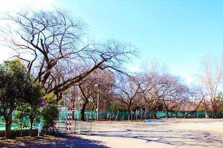 杉並区立松ノ木中学校 校庭