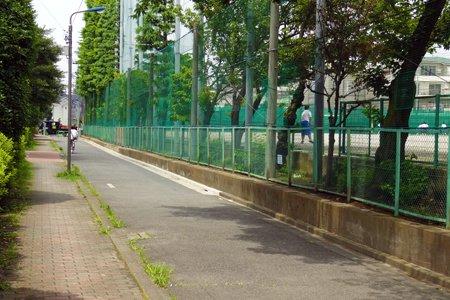 貫井中学校木立
