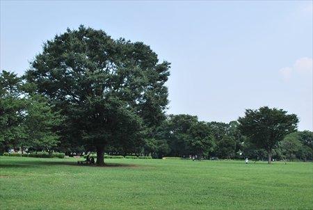 木場公園の風景