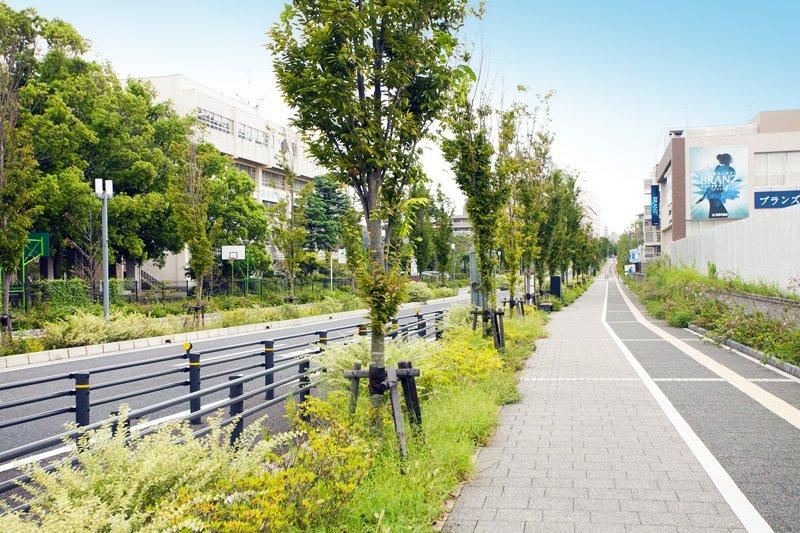「奏の杜フォルテ」前に延びる「はばたきのみち」。電柱地中化ですっきりと美しい街並み。