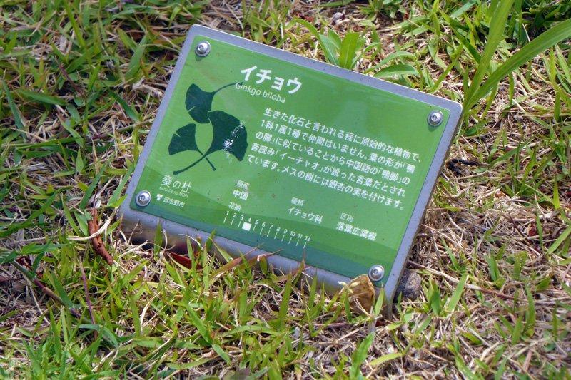 緑豊かな街なかに点在する樹名板