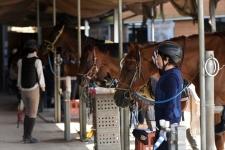 馬と心を通わせることで生まれる「無心の時間」/横浜市馬術協会 会長 武石敏勝さん