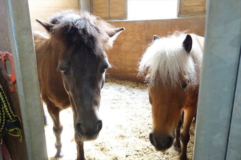 馬術協会で管理している馬