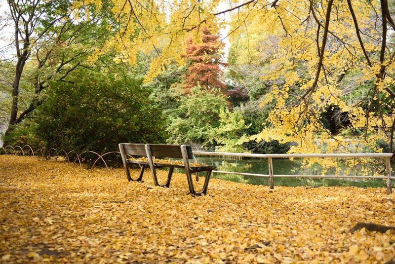 紅葉が美しい武蔵関公園