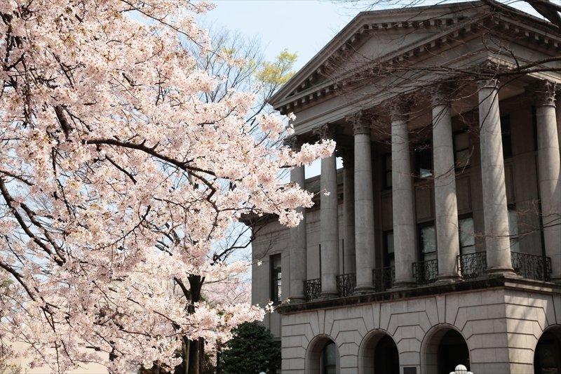 間宮記念館と桜