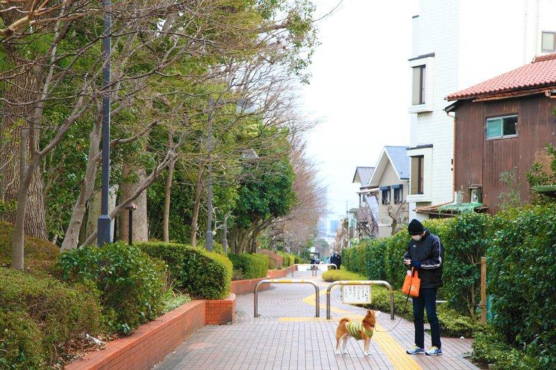 周辺は緑豊かで静かな街並み