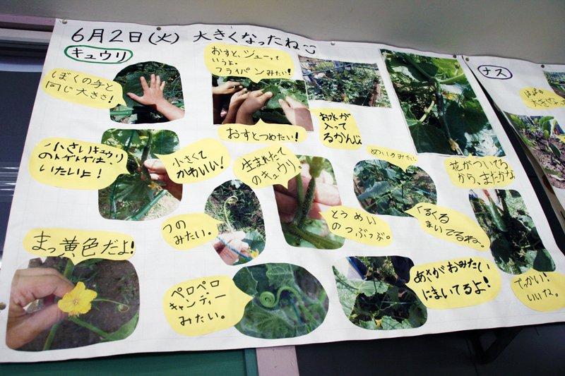 校内にはこうした環境学習に関する掲示物がたくさん