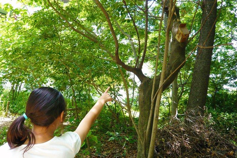 木々が生い茂るビオトープの様子