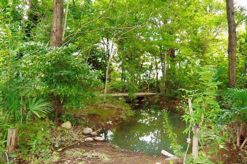 ビオトープにある池。奥には橋が架かっている