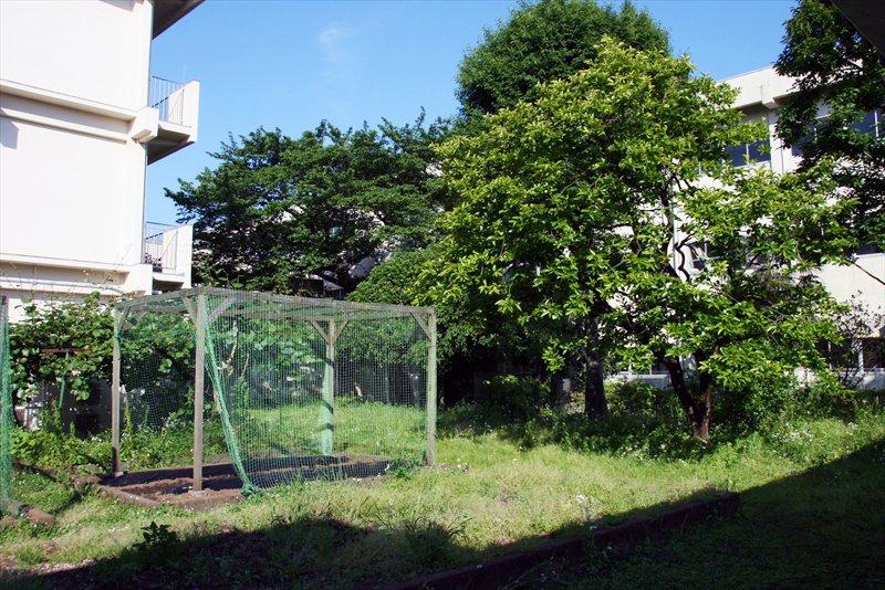 校内にはたくさんの樹木が茂る。中庭には菜園も。