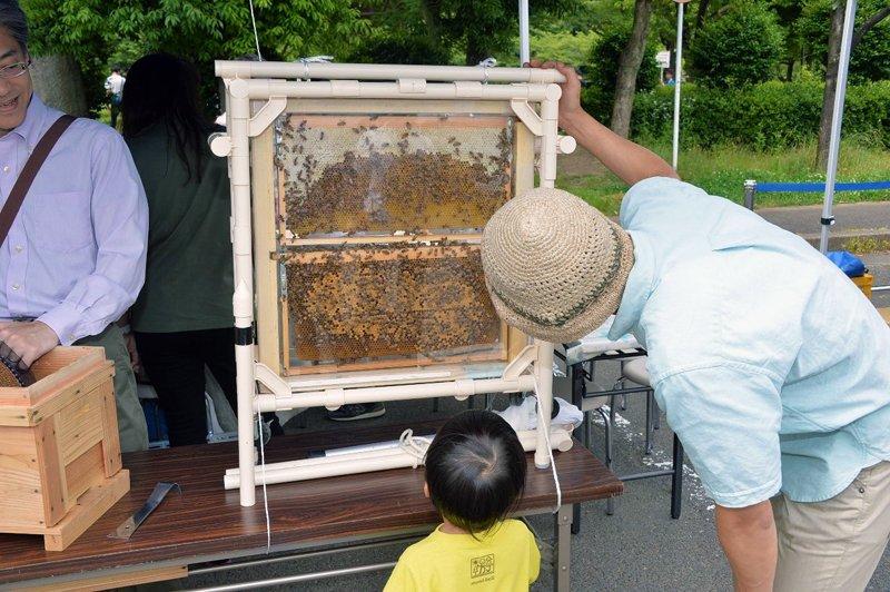 玉川大学の「ミツバチ巣箱の実験観測」
