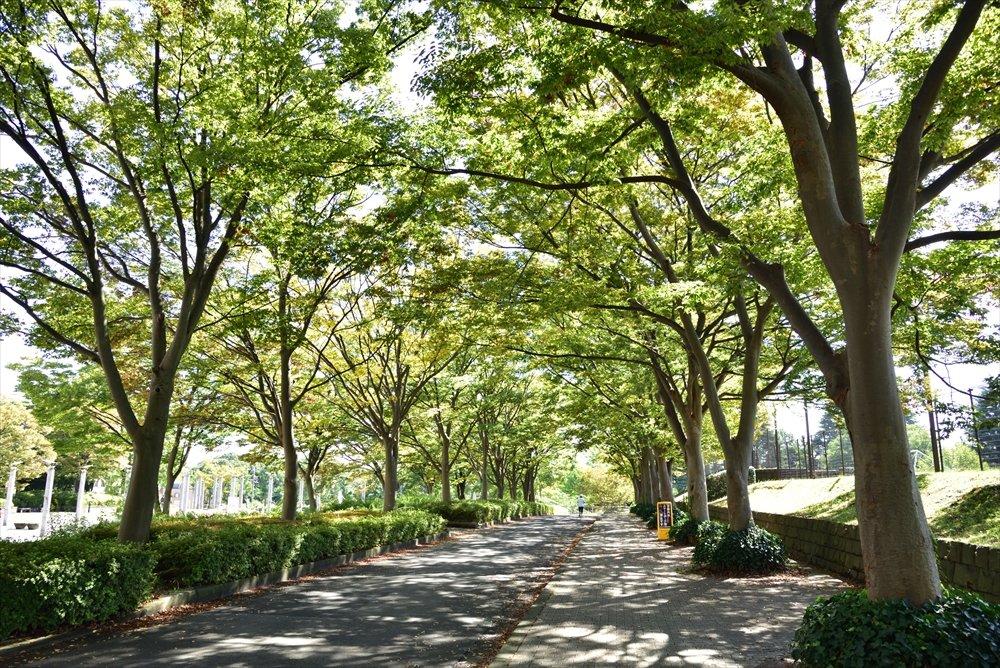「県立保土ケ谷公園」