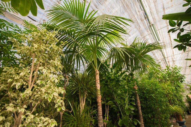 北本グリーンセンターの温室には数百種類にも及ぶ植物が