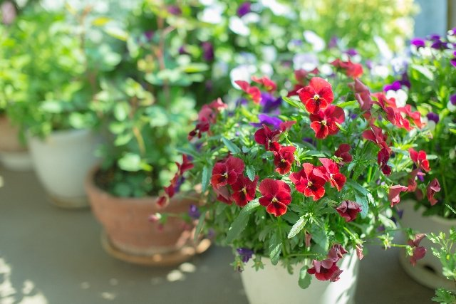 花鉢を設置すると空間に華やかさがでます
