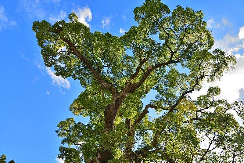 樹齢500年超のクスノキや白松、ツツジなどたくさんの植物が植えられている
