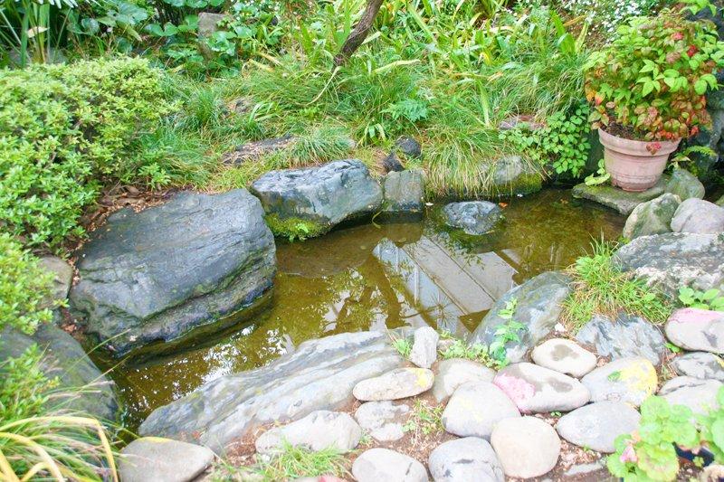 校内にある「ホタル池」