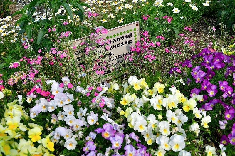 地域のボランティア団体が手入れをしている花々