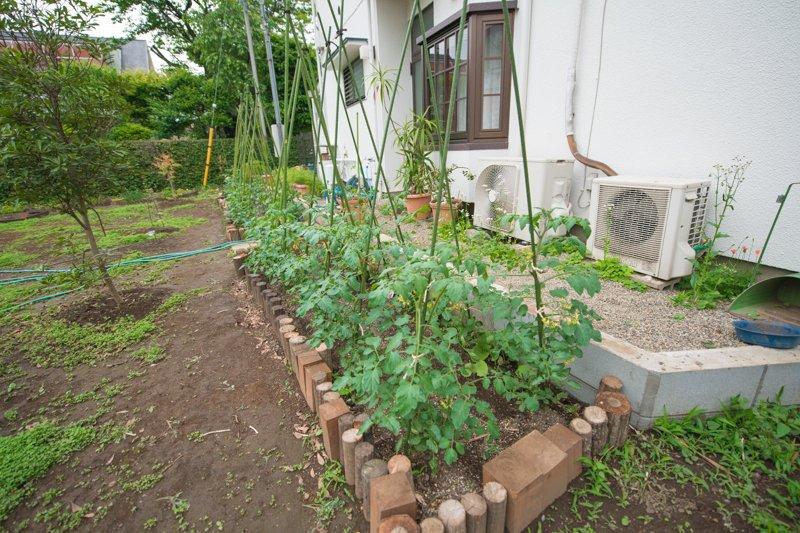 畑ではキュウリやトマトを育てている