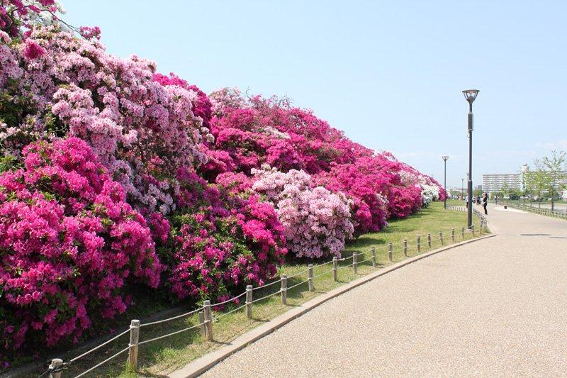 春にはつつじまつりで賑わう「浅香山公園」