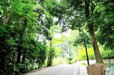地区計画を定め、緑と調和する景観形成を図る調布市入間町/調布市役所 緑と公園課・島崎真司さん、都市計画課・阿部直人さん