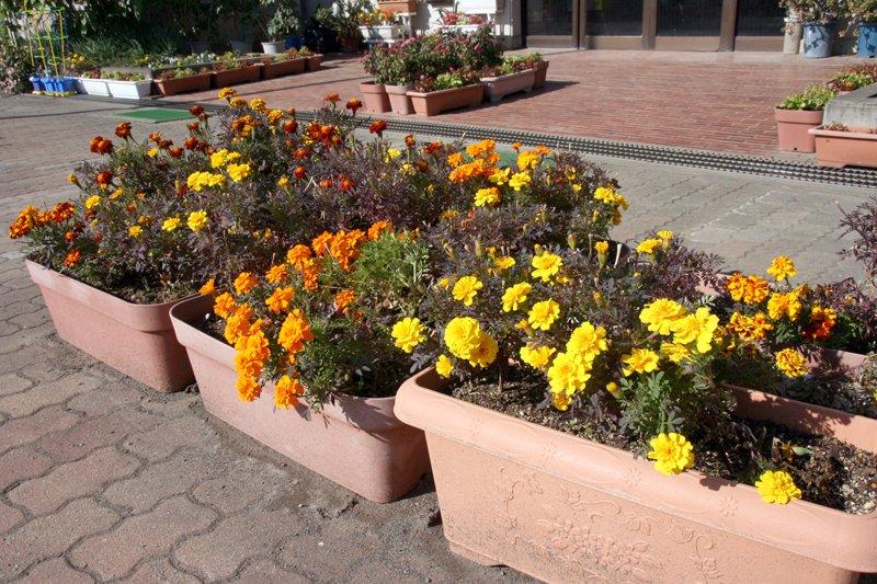 「花ボラ」さんたちの管理する花壇