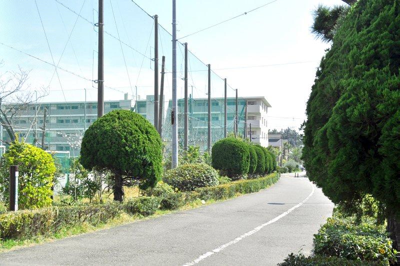 245826_takahama3