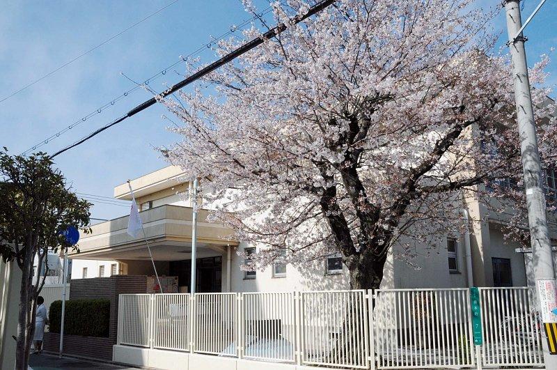満開の桜が美しい「大阪市立晴明丘小学校」