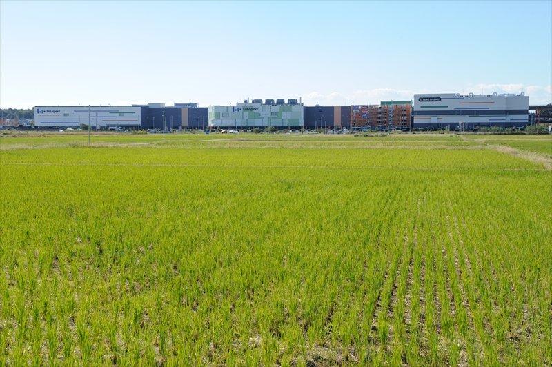 「ららぽーと富士見」横にある農地(田んぼ)