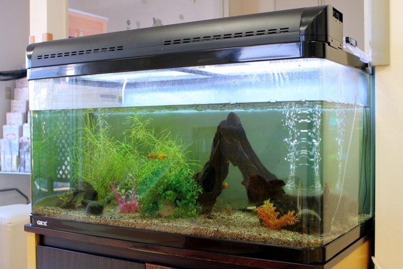 水槽の中で泳ぐ魚が、子どもの好奇心をくすぐる