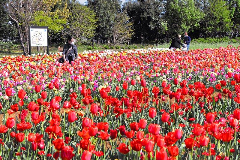 花菜ガーデン(神奈川県立花と緑のふれあいセンター)