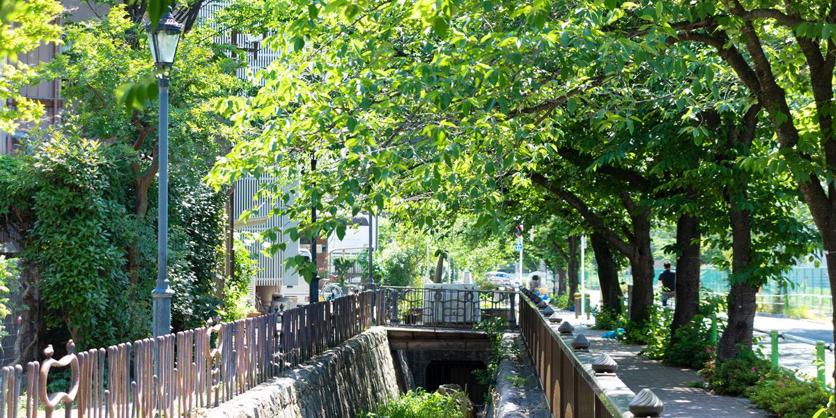 旧白子川緑道